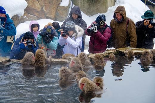 Khỉ rủ nhau đi tắm suối nước nóng hàng đàn rất vô tư, mặc cho du khách vây kín xung quanh chụp ảnh. (Ảnh: Internet)