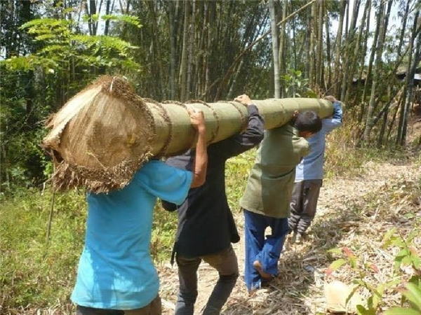 Một thân tre phải cần đến 4 người khiêng. (Ảnh: Thông tấn xã Thái Lan