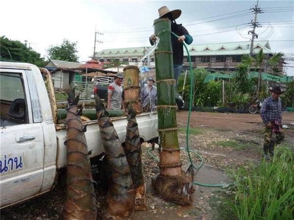 Một đoạn thân tre được rửa sạch trước khi được chất lên xe tải. (Ảnh: Thông tấn xã Thái Lan)