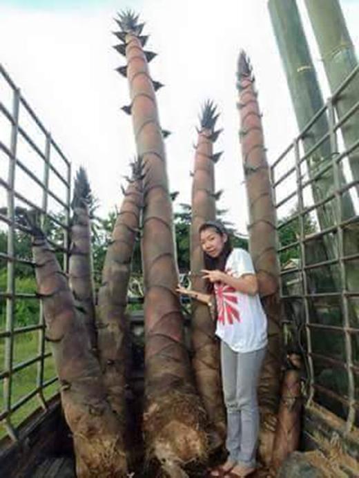 Một số khách du lịch tìm đến chụp hình với tre và măngkhổng lồ (Ảnh: Thông tấn xã Thái Lan)