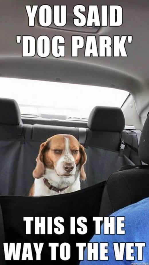 """""""Sao bảo đi công viên cho chó? Đây là đường đến phòng khám mà. Tưởng 'ông' không biết chữ à?"""" (Ảnh: Internet)"""
