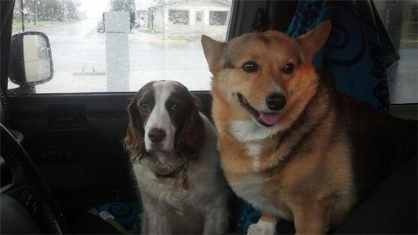 Một chú chó thì tỏ vẻ mặt thất vọng với sự lừa dối của chủ trong khi chú kia thì vẫn chưa hiểu ra vấn đề sống còn ở đây. (Ảnh: Internet)