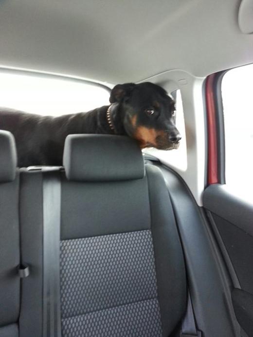 """""""Đừng hòng bắt tôi bước ra đấy, đừng hòng bắt tôi xuống xe, đừng hòng bắt tôi vào phòng khám."""" (Ảnh: Internet)"""