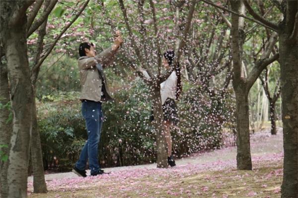 Phẫn nộ chàng trai rung cây cho hoa anh đào rụng để bạn gái thoải mái tự sướng