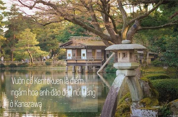 Bất luận còn sống thì phải đến Nhật ngắm sắc hoa anh đào một lần