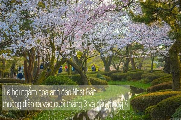 Bất luận còn sống thì phải đến Nhật ngắm hoa anh đào một lần