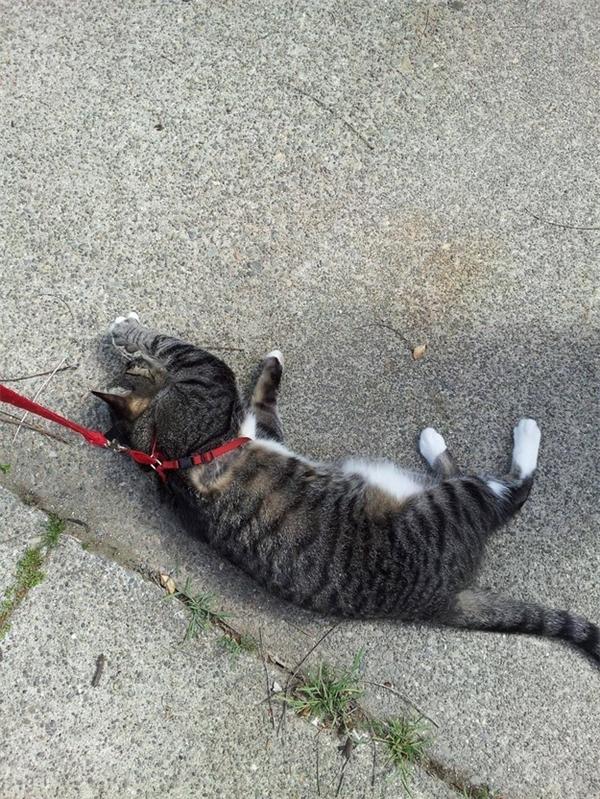P/s: làm thân con mèo cũng khổ quá đây nè. (Ảnh: Internet)