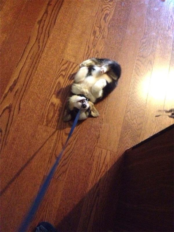 Mình cắn đứt cái dây này là mình sẽ không phải đi nữa. (Ảnh: Internet)