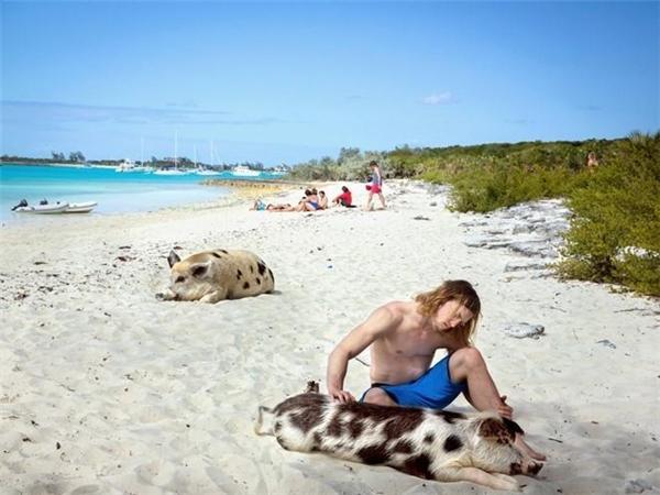 Một du khách thích thú vuốt ve chú lợn đang nằm tắm nắng trên bãi biển. Ảnh: Nytimes.