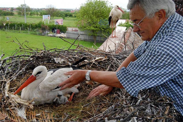 Chân dung ông Stjepan Vokić, người chăm sóc cho Malena mỗi khi Klepetan đi vắng (Ảnh: Internet)