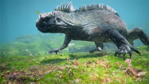 Cận cảnh loài kì nhông có hình dáng y hệt... Godzilla!
