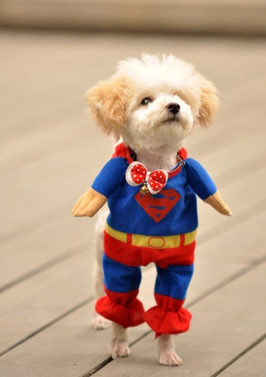 """""""Em ước mơ được làm nữ siêu nhân"""". (Ảnh: Internet)"""