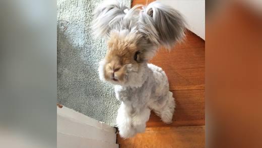 Phát cuồng với chú thỏ có hình dáng như... pokemon!