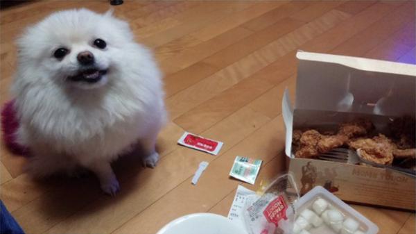 """""""Chủ ơi, con ngoan, con dễ thương nè, cho con ăn đi!"""" (Ảnh: Internet)"""