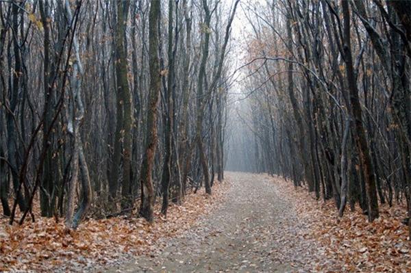 Rừng Hoia Baciu được coi là Tam giác Quỷ ở Romania. Có nhiều câu chuyện rùng rợn về người mất tích, các thiết bị điện tử dừng hoạt động hay vật thể bay không xác định (UFO) tại khu rừng này.