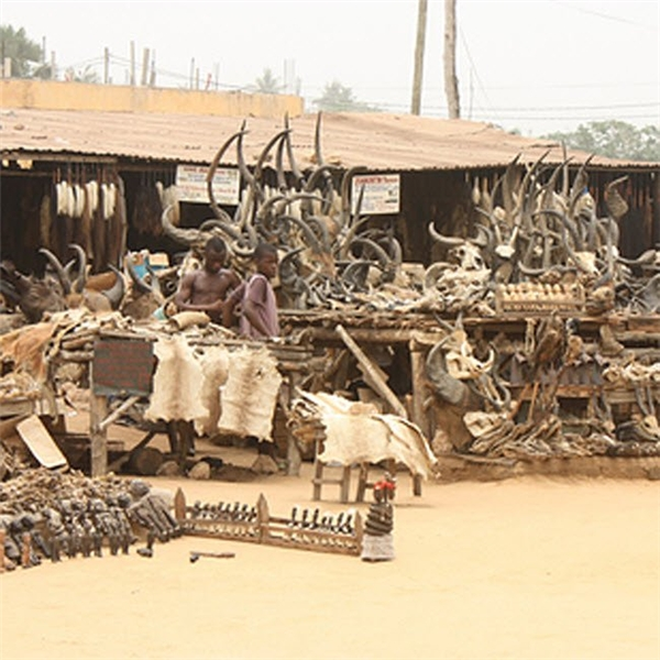 Khu chợ Akodessewa ở Togo là nơi chuyên bán các sản phẩm sọ và đầu cũng như da động vật hoang dã.