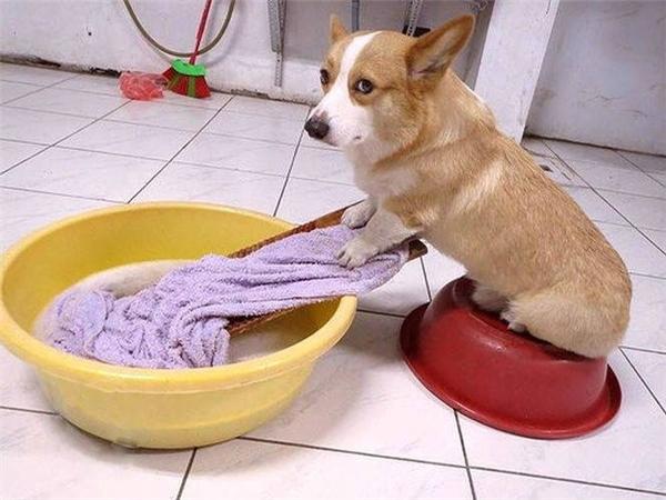 Không phải tè dầm đâu mà bị chủ bạc đãi, ngày nào cũng bắt tự đi giặt chăn. (Ảnh: Internet)
