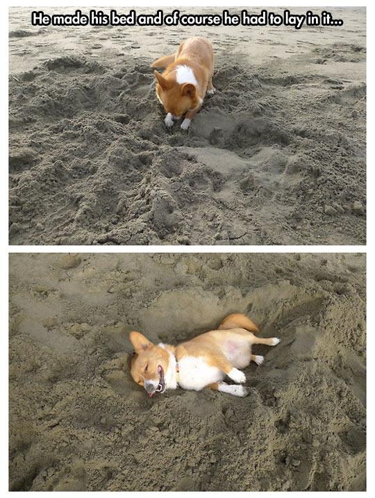 Ra bãi biển làm gì? Dọn giường rồi chui vào nằm ngủ thôi. (Ảnh: Internet)