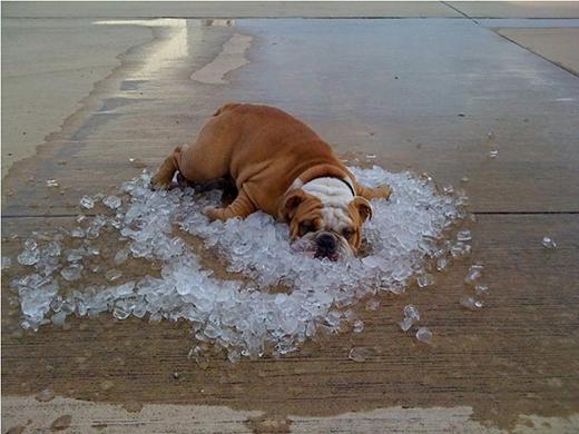 """""""Nặng đô"""" hơnlà dùng nước đá để làm mát. (Ảnh: Internet)"""