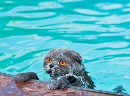 Cái cảm giác vừa từ hồ bơi lên thật là khó tả. (Ảnh: Internet)