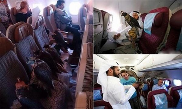 12 chú chim của một đại gia Ả Rập được ngồi khoang hạng nhất trên máy bay, mỗi chú một ghế