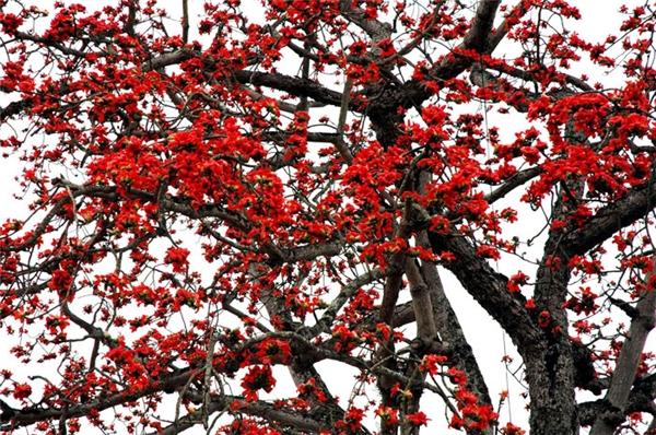 Chỉ điểm teen Hà Thành 3 điểm chụp hoa gạo đẹp ngất ngây mùa này