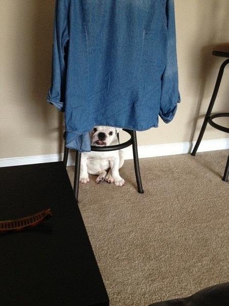 Nấp dưới cái áo này chắc cô chủ sẽ không tìm ra đâu.