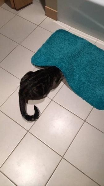 Tôi là tấm thảm lông có đuôi.