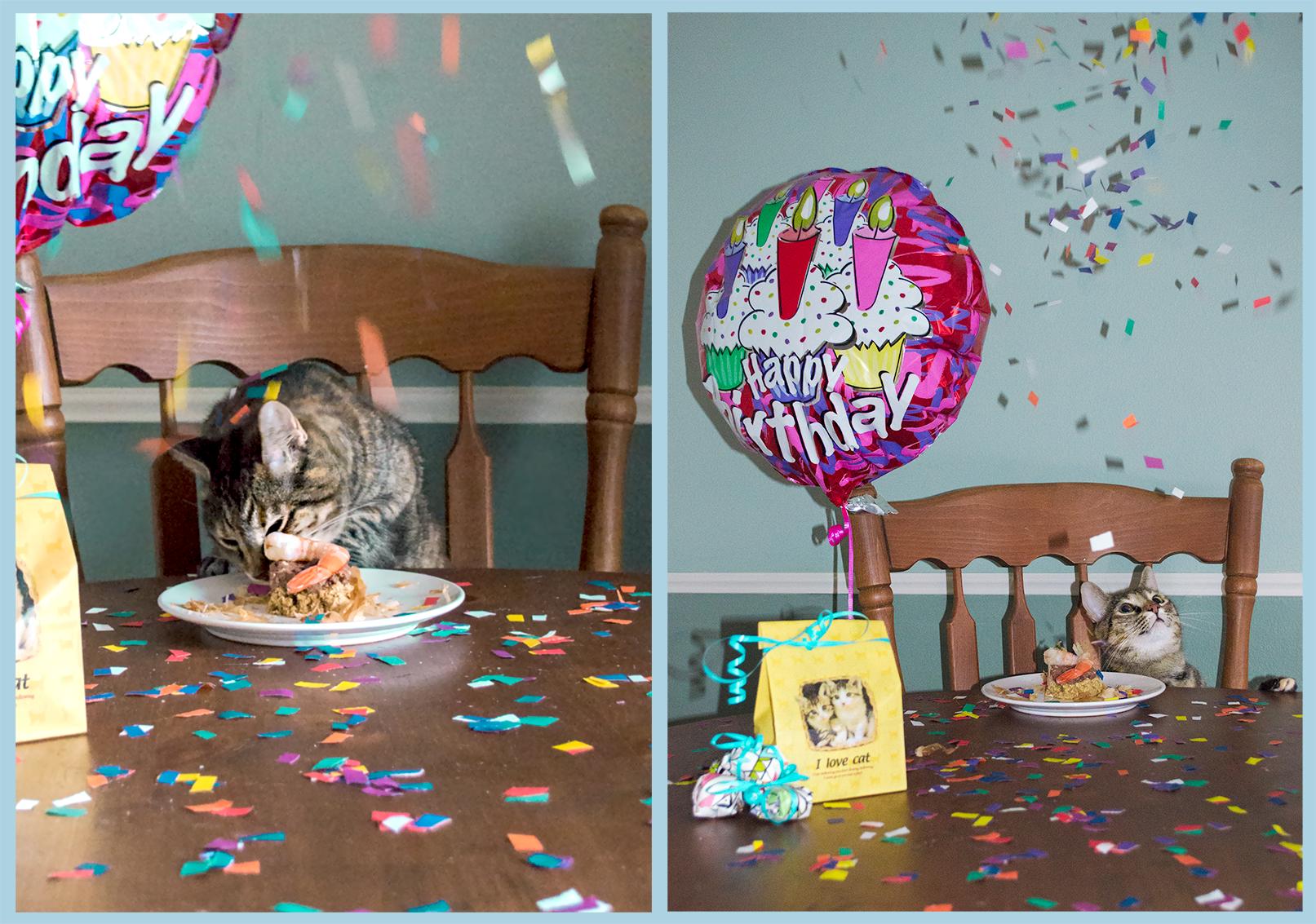 """Dù ngỡ ngàng với pháo giấy mà chủ nhân dành cho mình, chú mèo này vẫn mải mê ăn uống say sưa mặc kệ """"sự đời"""".(Ảnh: Internet)"""
