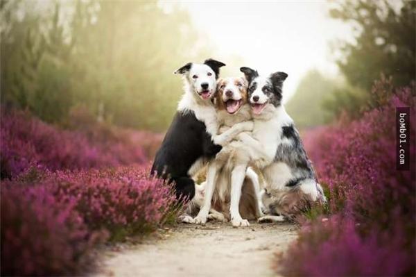 Gia đình chó lúc chụp ảnh gia phả. (Ảnh: Internet)