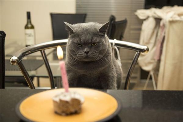"""""""Đã bảo là không thích tổ chức sinh nhật rồi mà. Cứ bắt người ta ngồi rồi chụp hình đăng lên mạng cơ"""".(Ảnh: Internet)"""