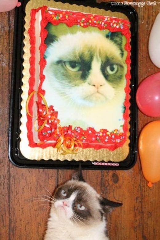"""1001 biểu cảm của thú cưng mừng sinh nhật khiến tim bạn """"tan chảy"""""""