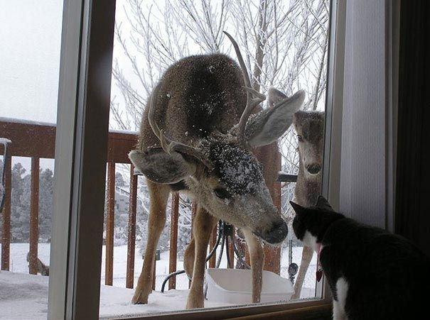 Nghe nói nhà này mới có người dọn vào, hàng xóm đến thăm. (Ảnh: stormfront.org)