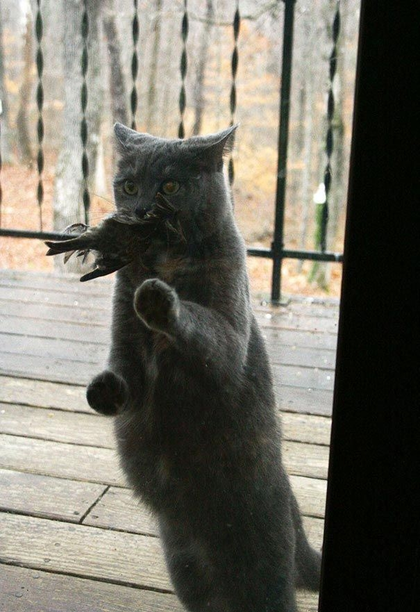 Không phải trốn đi chơi đâu mà là đi săn mồi về nuôi chủ đấy. (Ảnh: pinterest.com)