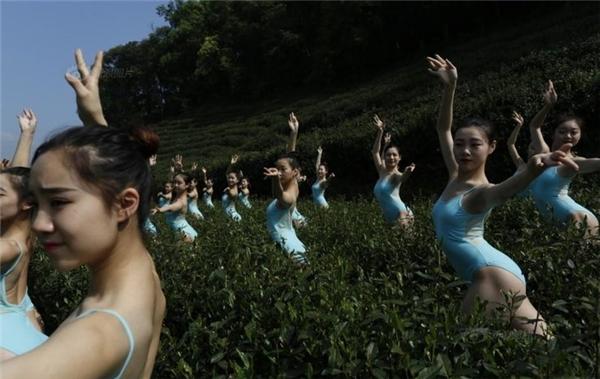 Trên thực tế, các cô gái này ăn mặc khá gợi cảm, đồ bó sát và có phẩn hở hang, kệch cỡm do với một buổi biểu diễn nghệ thuật vì thiên nhiên.