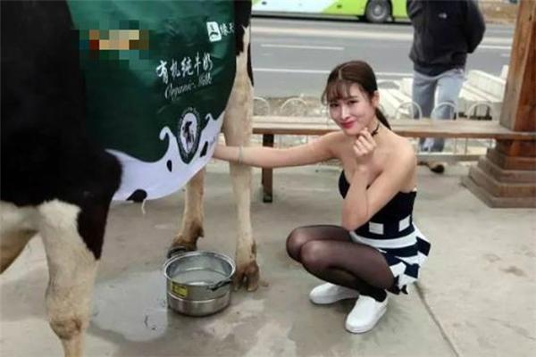 Thiếu nữ gợi cảm vắt sữa bò trên phố thu hút người qua đường