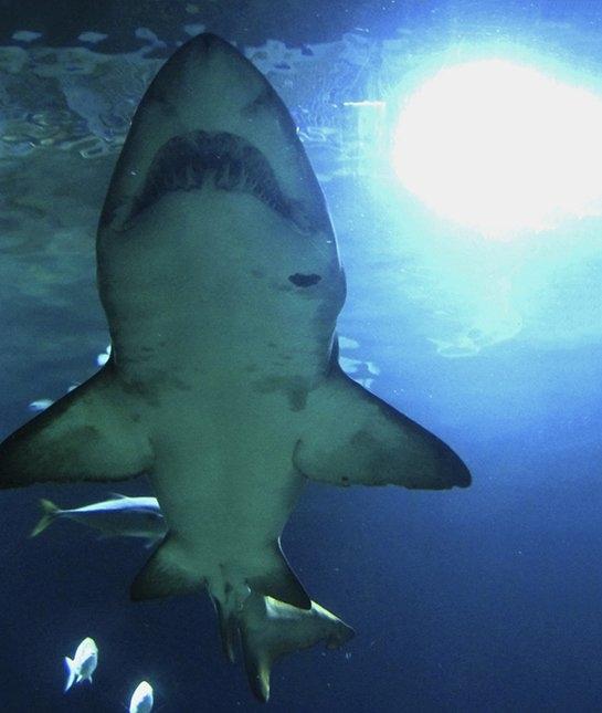 """Cá mập không được trẻ con xem là """"người tốt"""". (Ảnh: Getty Images)"""