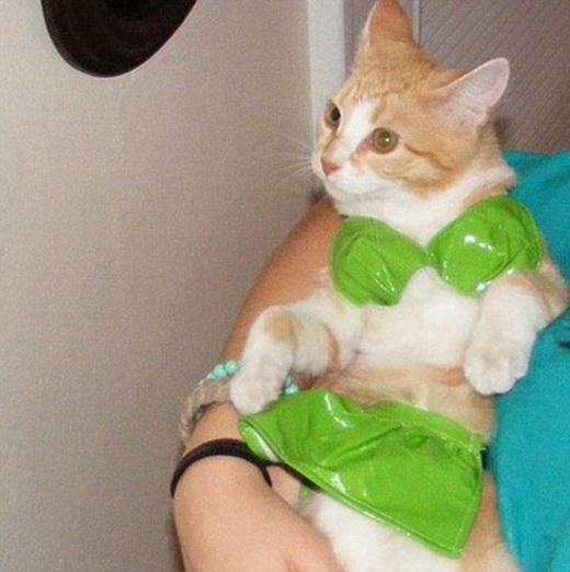 Mặc bikini thì phải làm mặt kiêu mới hợp!(Ảnh: Internet)