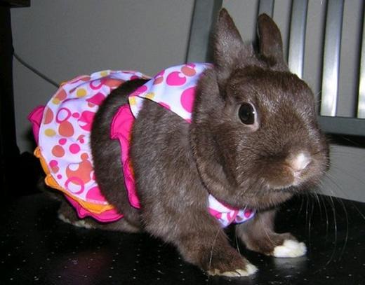 Có anh thỏ đẹp trai nào lạc trong đôi mắt tròn xoe này không?(Ảnh: Internet)