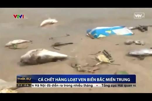 Sốc với nguyên nhân khiến cá chết hàng loạt tại miền Trung