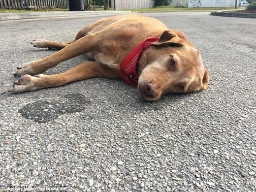 Chú chó Paco đáng thương nằm nguyên tại hiện trường tai nạn dù thi thể cô chủ đã được đưa đi nhiều giờ trước. (Ảnh: Internet)