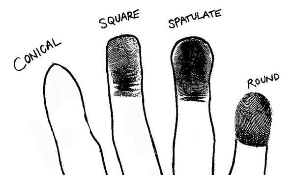 Từ trái sang: đầu ngón tay dạng nhọn, vuông, thìa bè, tròn (Ảnh: Internet)