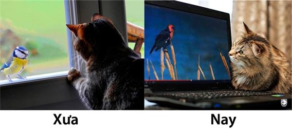 Ngày xưa còn được nhìn thấy em ấy tận mắt, nghe em ấy hót cho nghe tận tai. Giờ đây anh mèo ta chỉ có thể nhìn em qua một màn hình phẳng lặng lạnh lẽo thôi sao?(Ảnh: Internet)