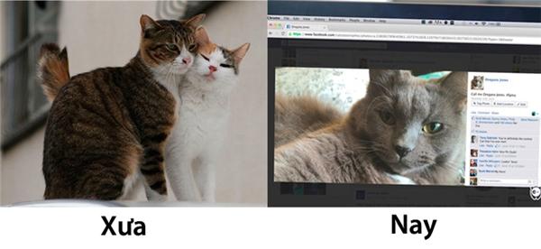 """Lúc trước, muốn tán cô mèo hàng xóm thì chỉ cần một con cá và cái liếc mắt điệu nghệ. Còn giờ này, phải nhờ cậu chủ post hình """"tuyển vợ"""" như thế này các bác ạ!(Ảnh: Internet)"""