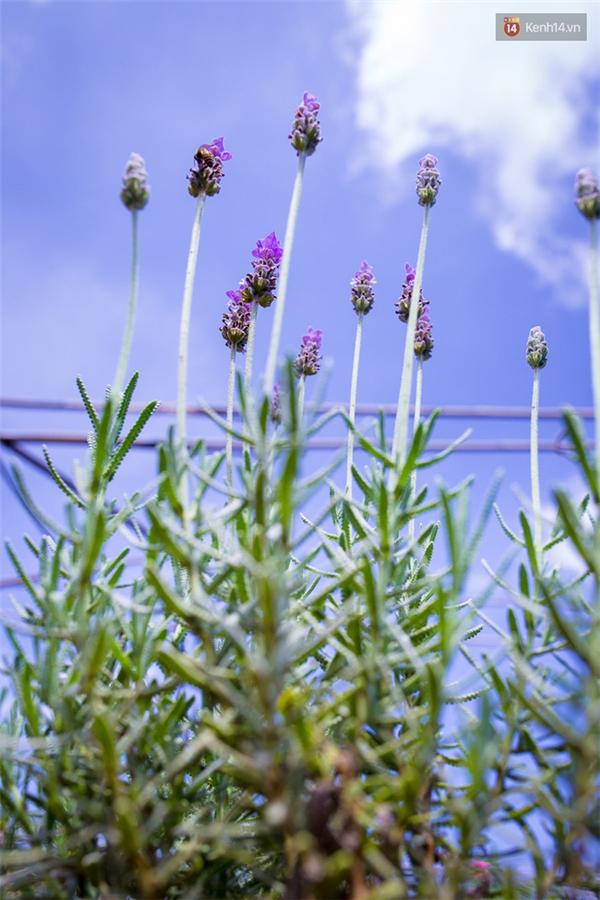 Những cành hoa vươn thẳng lên trời xanh.