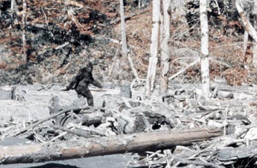 Những bằng chứng về Bigfoot chưa thuyết phục lắm. (Ảnh: Internet)