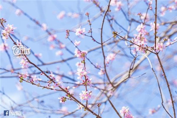 Vẻ đẹp thanh mảnh cùng màu sắc hiền hòa cũng làm dịu bớt cái nóng nực của ngày hè chói chang.