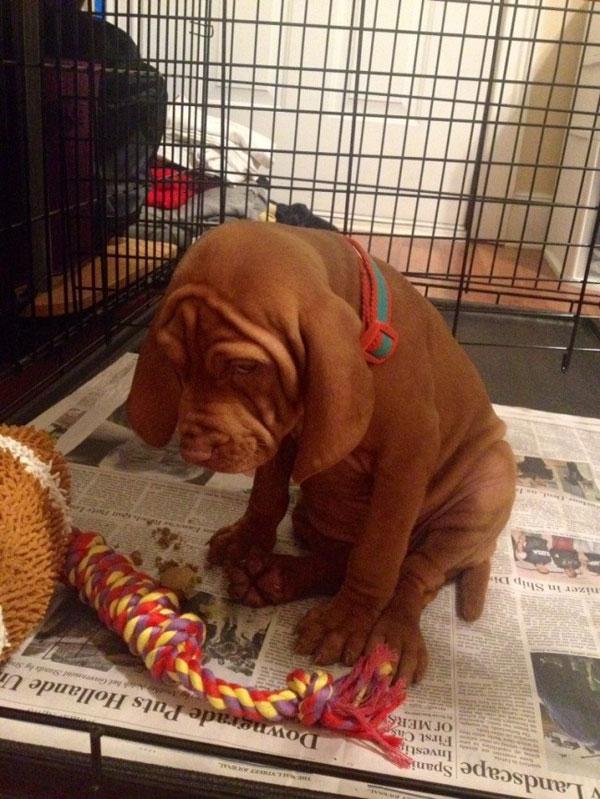 """Remicũng là một trong số những chú chó nổi tiếng mạng xã hội khi sở hữu gương mặt """"đau thương tột cùng"""".Remicòn được nhiều người đặt tên là """"chú chó mặt buồn nhất hành tinh"""".(Ảnh: Internet)"""