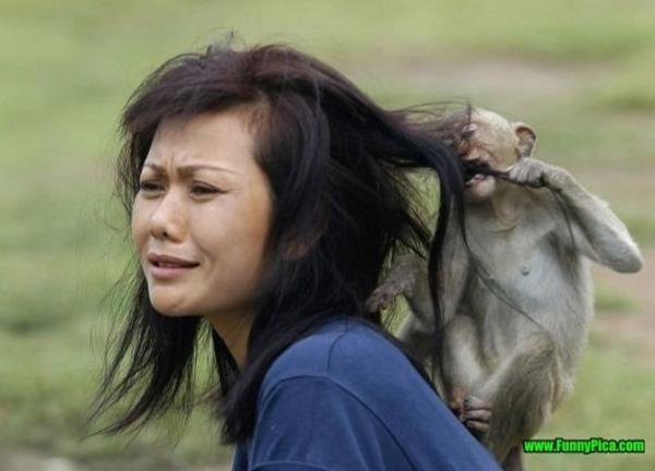 9. Chịu thua với con khỉ này, làm người ta tơi tả hết rồi.