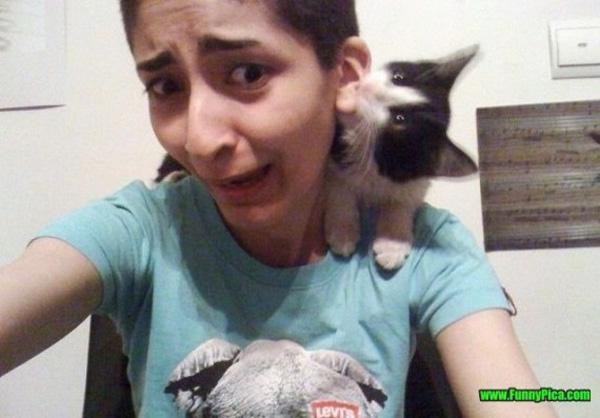 11. Con mèo láu cá này.